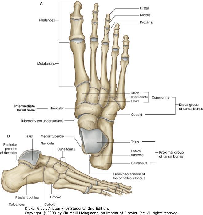 artrózisos kezelési érzéstelenítés gyógyszer sportolók számára ízületi kondroitin