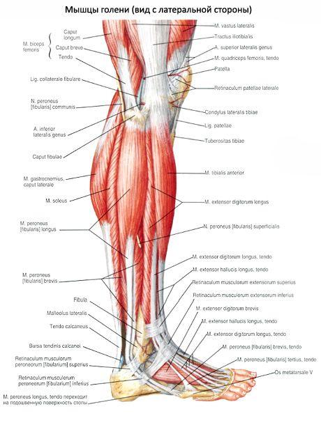 a térdízület fájdalma nem hajlítja meg a lábát hormonális háttér és ízületi fájdalom