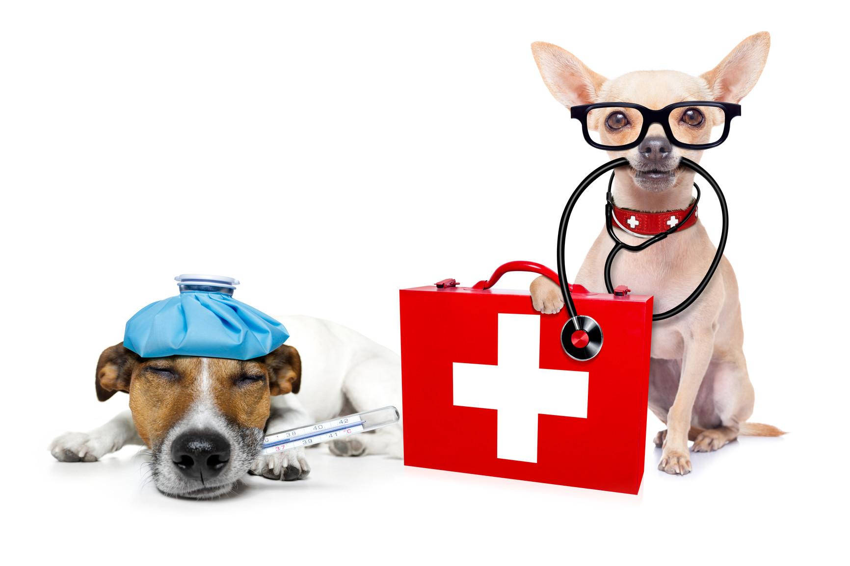 közös kenőcs állatorvosi