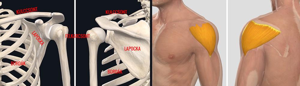 a vállízület ínszalagjának gyulladása fagyos ujjak fájnak ízületeket
