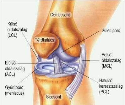 térdízületi kezelés klinika csípőízületi bursitis kezelés