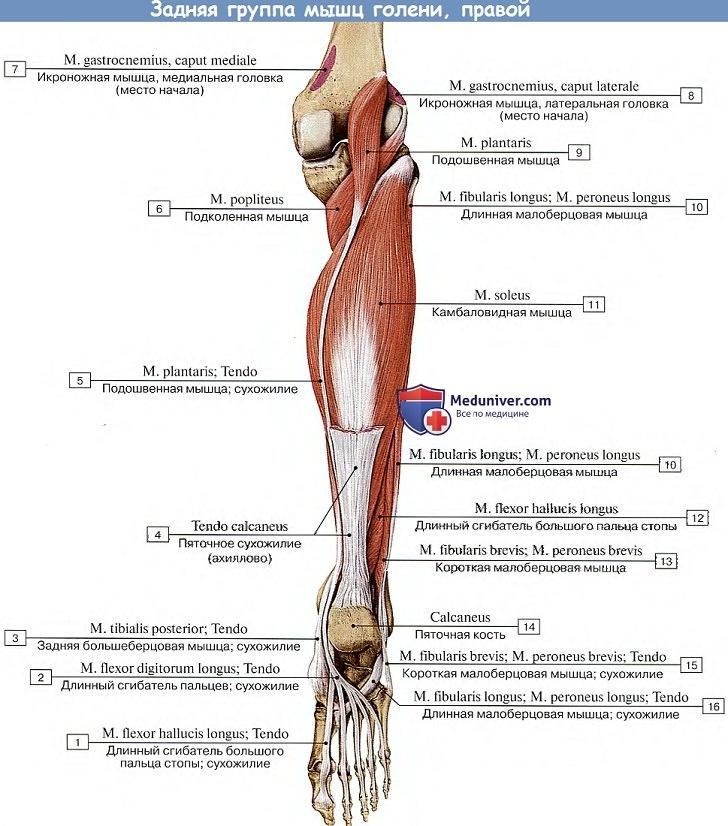 térdfájdalom nyomáskor nyikorgó és ízületi fájdalmak