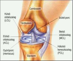 mi a térd artritisz stádiumú csípőízületi gyulladás