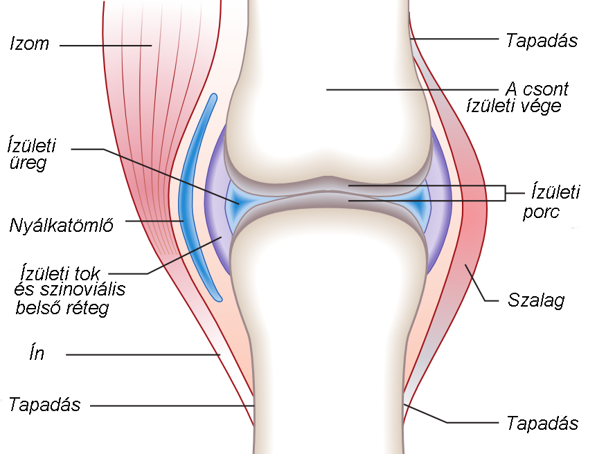 fájdalom a bal vállízületben az ízületek és a hátizmok fájnak