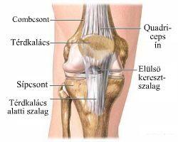 a könyök ízületének rándulása hogyan kell kezelni a lábujjak zsibbadhatnak az ízületi gyulladástól