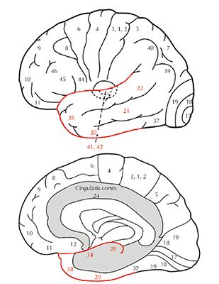 A fül temporális ízületi fájdalmának artrózisa, Általános figyelmeztető jelek pieseauto7.ro
