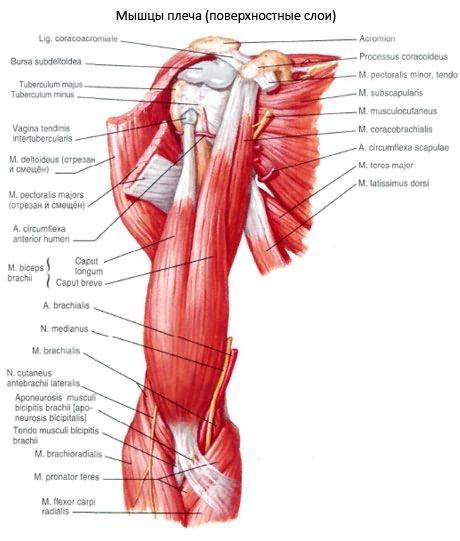 a vállízület deformáló artrózisának tünetei