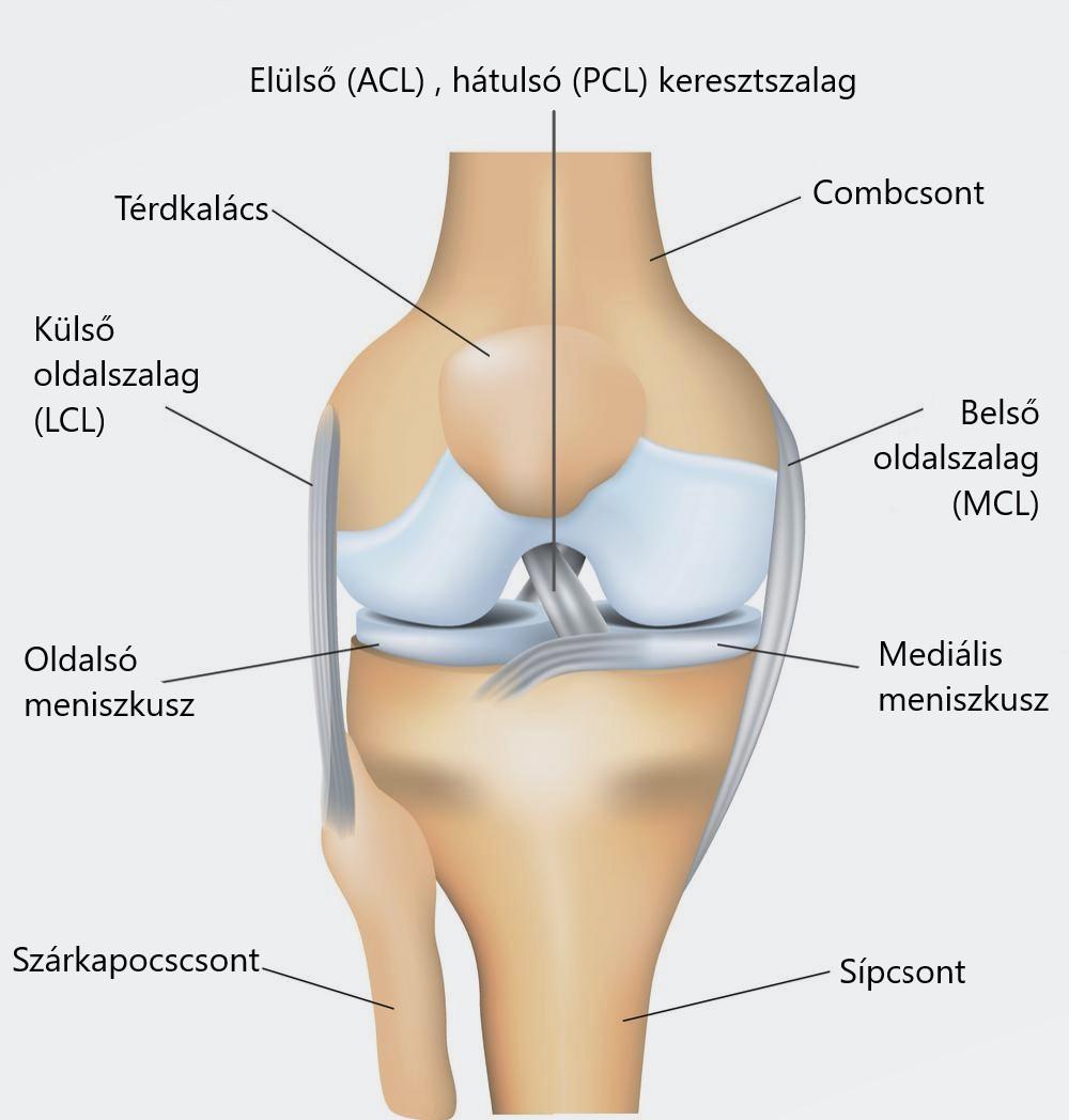 akut fájdalom a térd alatt térdízület szerkezet kezelése