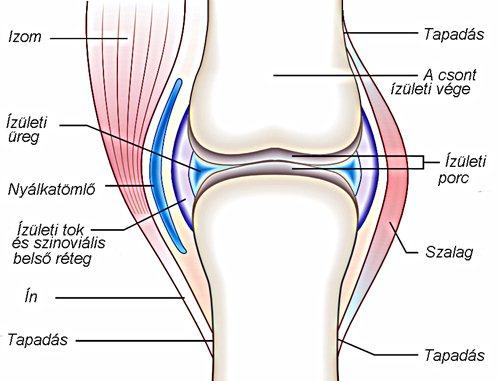 az alsó végtagok ízületeinek gyulladásának okai hogyan lehet kezelni a nyaki gerinc artrózisát