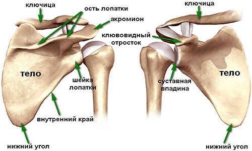 boka artrózisának modern kezelése