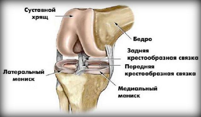 a térdízület fájdalma nem hajlítja meg a lábát sofia krém ízületi fájdalmak kezelésére