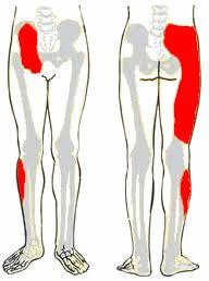A csípőfájdalom okai és kezelése - Gyógytornázenemanok.hu - A személyre szabott segítség