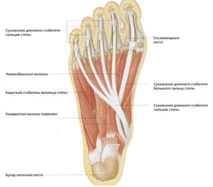 ayurvédikus balzsam ízületekhez fájdalom a kezek ízületeiben okozza a kezelést