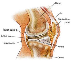 mi a teendő, ha a lábízületek nagyon fájnak gonartrózis jelei és tünetei
