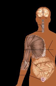 ízületi fájdalom és gyomorhurut