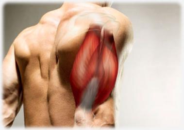 fájdalom és gyengeség a könyökízületben