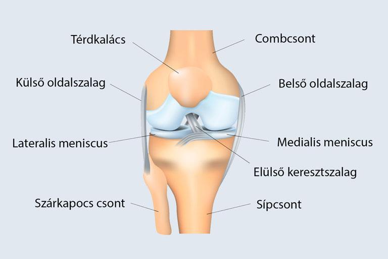 térdízület-fájdalom