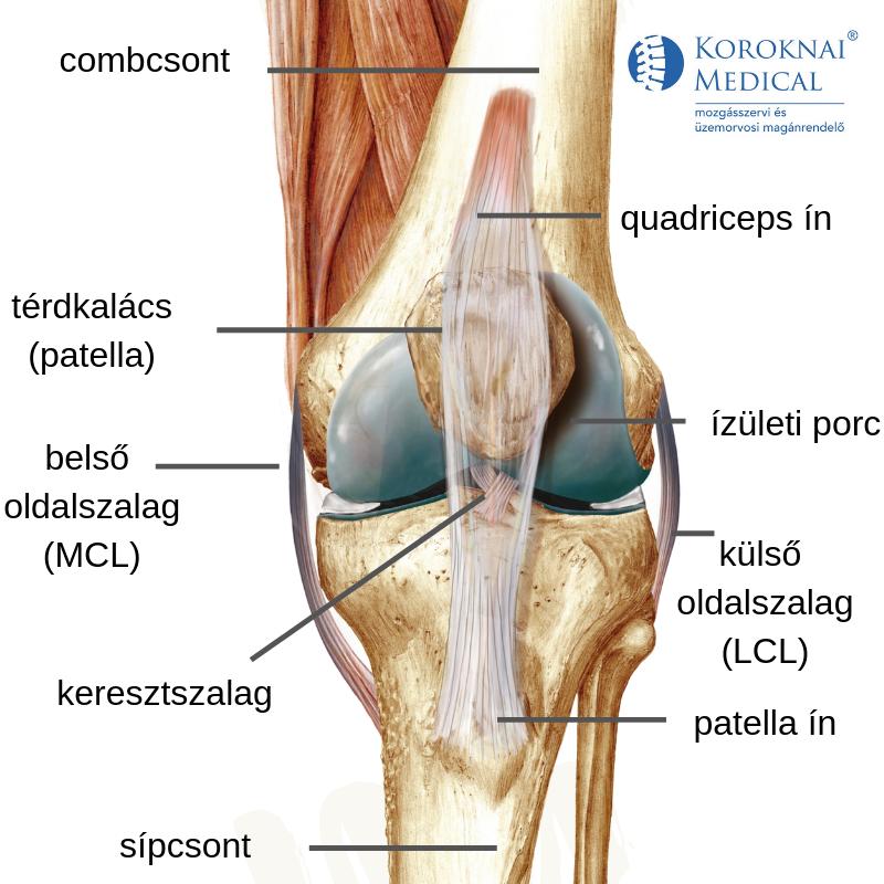 hogyan kezeljük a térd 1 fokú artritiszét térdízületi fájdalom edzés után