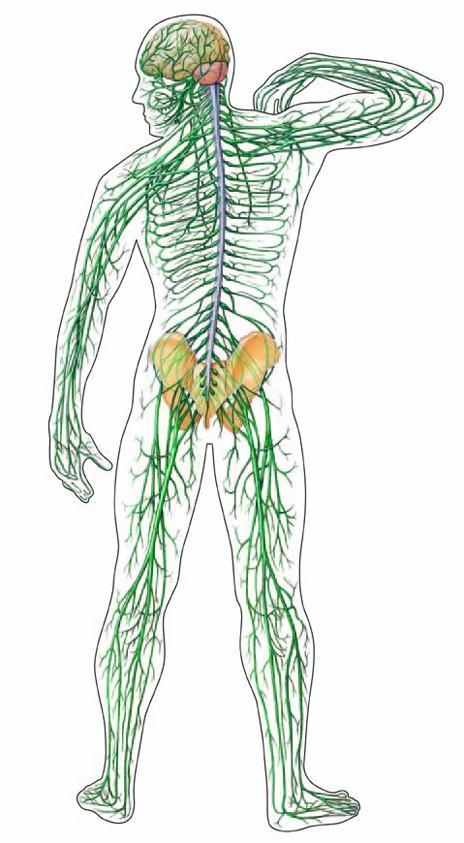 fájdalom a lábakban karok gerinc ízületeiben